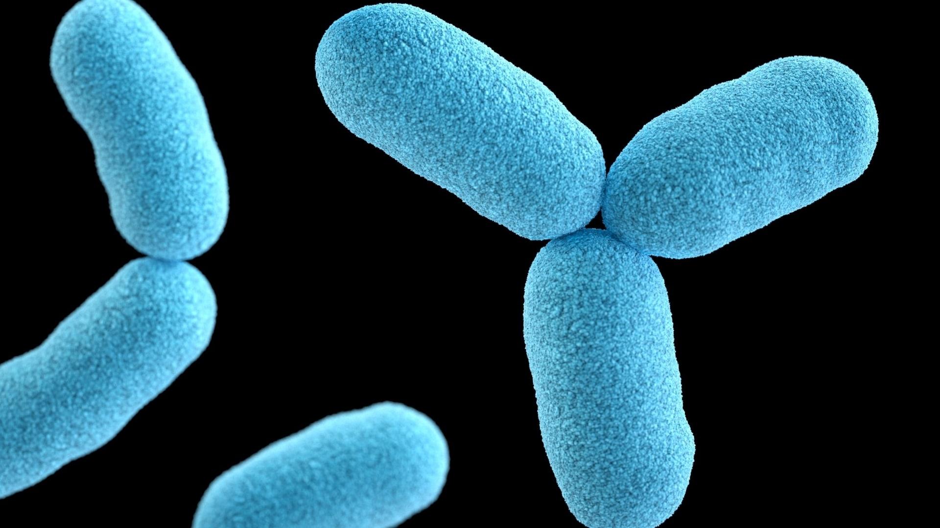 Zahnaerzte in der Filzfabrik Prophylaxe Bakterien